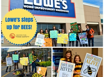 Lowes Agrees To Phase Out Bee-Toxic Neonicotinoids